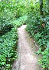 Walkway in Quinta da Regaleira