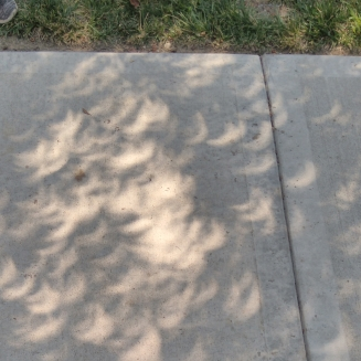 crescents in the tree shadows